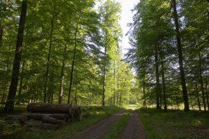 Familienbetriebe Land und Forst Schleswig-Holstein e.V.